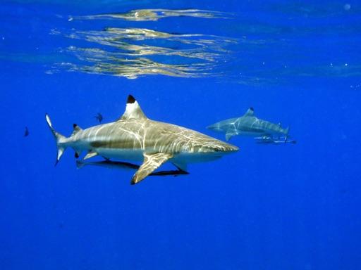 Entreprise d'excursions et de prestations touristiques à Bora Bora
